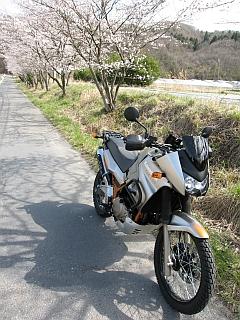 KLE500と桜