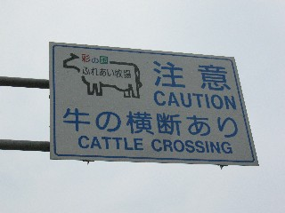 牛に注意!