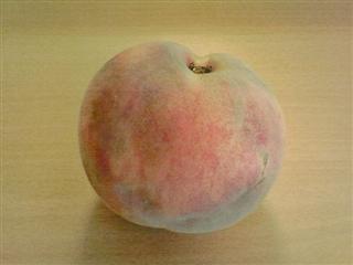 国見SAで買った桃。翌日盛岡で食べました